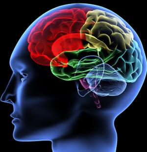20081029_brain.jpg